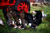Current Litter
